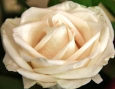 flower arranging 075